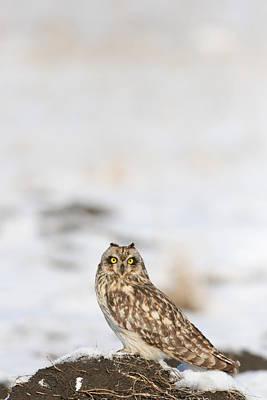 Photograph - owl by Dragomir Felix-bogdan