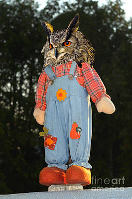 Owl Photograph - Owl In Farm Jeans Perched On A Pole by Les Palenik