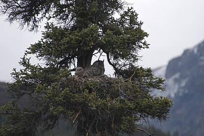 Owl Lookouts Print by Michael Gooch