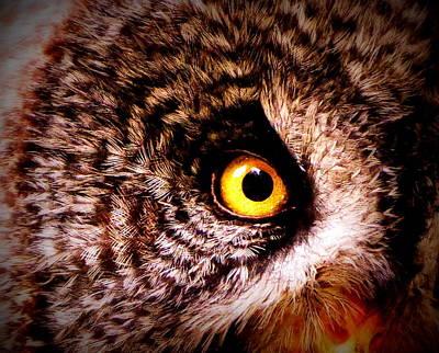 Owl's Eye Print by Ramona Johnston