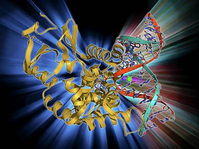 Polymer Photograph - Oxoguanine Glycosylase Complex by Laguna Design