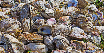Oysters 02 Print by Melissa Sherbon