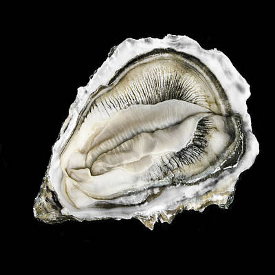 Vagina Photograph - Oysters 10 004 Ver1_20x20 by Andy Frasheski