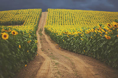 Sunflower Field Photograph - Oz by Carrie Ann Grippo-Pike