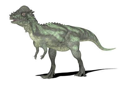 Paleozoology Photograph - Pachycephalosaurus Dinosaur by Friedrich Saurer