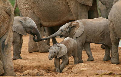 Family Love Photograph - Pachyderm Pals by Bruce J Robinson
