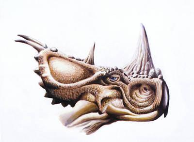 Pachyrhinosaurus Dinosaur Head Print by Deagostini/uig