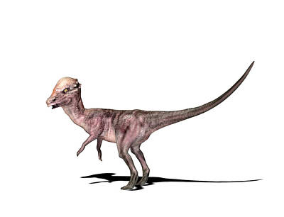 Paleozoology Photograph - Pachysaurus Dinosaur by Friedrich Saurer