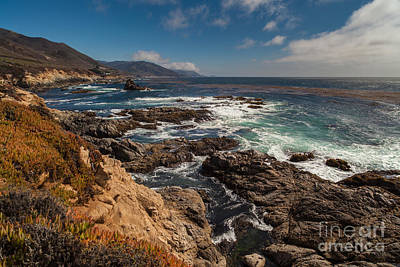 Big Sur California Photograph - Pacific Coast Life by Mike Reid