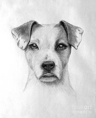 Animal Shelter Drawing - Paige by Denise M Cassano