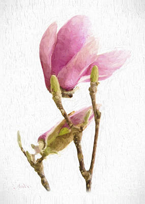 Painterly Pink Magnolia Print by Andee Design