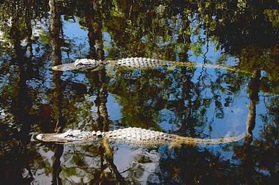 Pair Of American Alligators Print by Rudy Umans