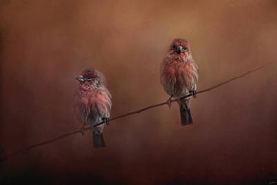 House Finch Photograph - Pair Of Finches by Jai Johnson