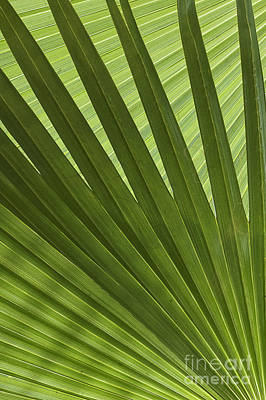 Palm Abstract Print by Patty Colabuono