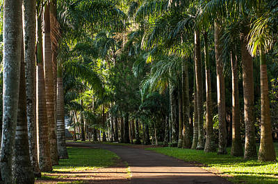 Palm Alley. Pamplemousse Botanical Garden. Mauritius Print by Jenny Rainbow