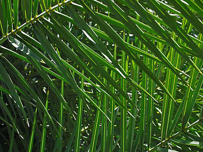 Nature Photograph - Palm Crosshatch by Rona Black