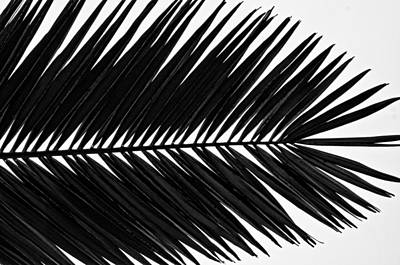 Plants Photograph - Palm Frond by Don Schwartz