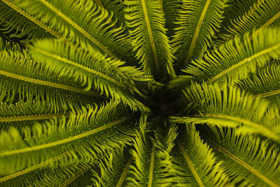 Del Rio Tx Print featuring the photograph Palm Fronds by Amber Kresge