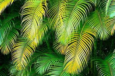 Palm Leaves In Green And Gold Print by Karon Melillo DeVega