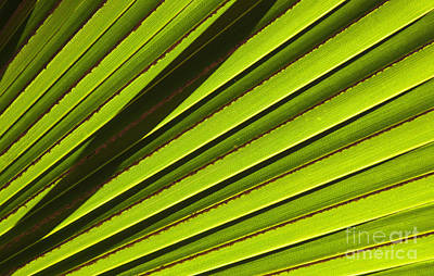 Palm Lines Print by Mike  Dawson