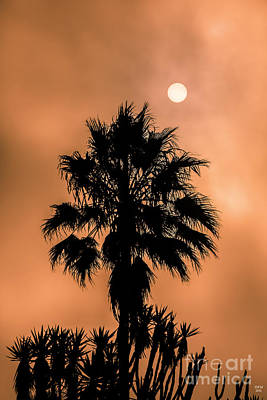 Light Photograph - Palm Silhouette At Sunset by David Millenheft