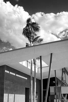 Palm Springs Animal Shelter Palms Bw Palm Springs Print by William Dey