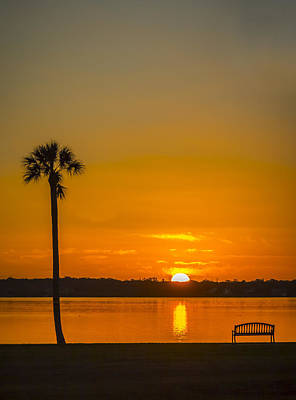 Palm Sun And Bench Print by Marvin Spates