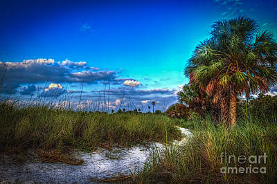 Saw Photograph - Palm Trail by Marvin Spates