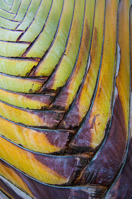 Palm Tree Abstract Print by Sebastian Musial