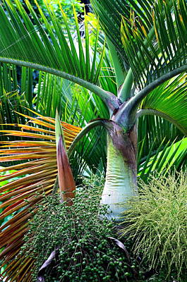 Palm Tree Inflorescence In The Rainforest  Print by Karon Melillo DeVega