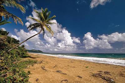 Palm Tree On Maunabo Beach Puerto Rico Print by George Oze