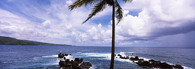 Tropical Climate Photograph - Palm Tree On The Coast, Honolulu Nui by Panoramic Images