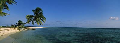 Palm Tree Overhanging On The Beach Print by Panoramic Images