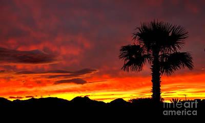 Palm Tree Silhouette Print by Robert Bales