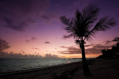 Palm Tree Sunrise Print by Sebastian Musial