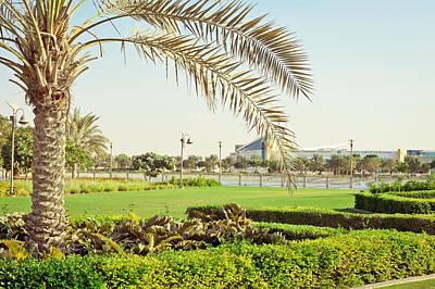 Arabia Photograph - Palm Tree by Tom Gowanlock