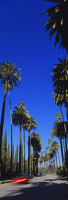 Beverly Hills Photograph - Palm Trees Along A Road, Beverly Hills by Panoramic Images
