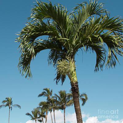 Palm Trees And Blue Sky Print by Sharon Mau