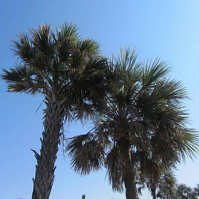 Beach Photograph - Palms At Fernandina 3 by Cathy Lindsey