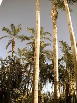 Photograph - Palms by Brynn Ditsche