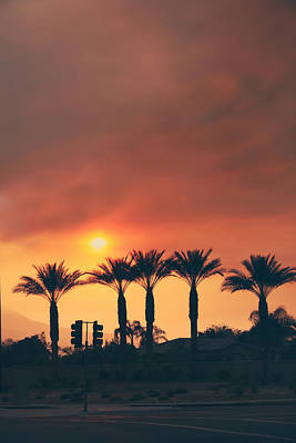 Streetlight Photograph - Palms On Fire by Laurie Search