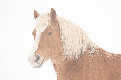 Palomino Horse Headshot Snow And Fog Print by James BO  Insogna