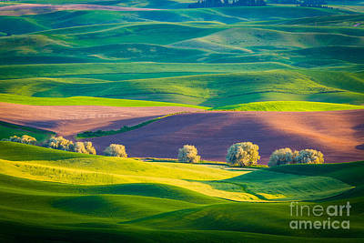 Rural Scenery Photograph - Palouse Field 3 by Inge Johnsson