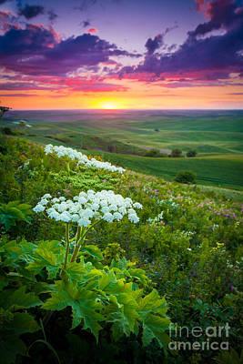Northwest Photograph - Palouse Flowers by Inge Johnsson