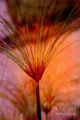 Pampas Grass - II Print by Susanne Van Hulst