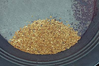 Precious Metal Photograph - Panned Gold by Dirk Wiersma