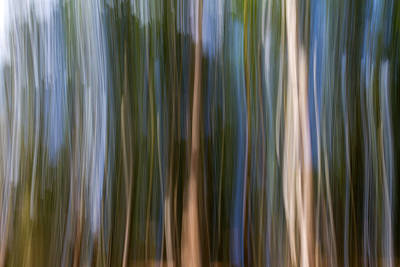Panning Forest 3 Print by Stelios Kleanthous
