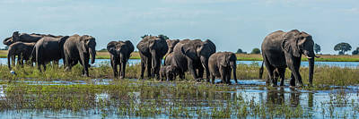 The Big Five Photograph - Panorama Of Elephants  Loxodonta by Nick Dale