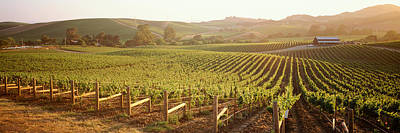 Vineyard In Napa Photograph - Panoramic View Of Vineyards, Carneros by Panoramic Images