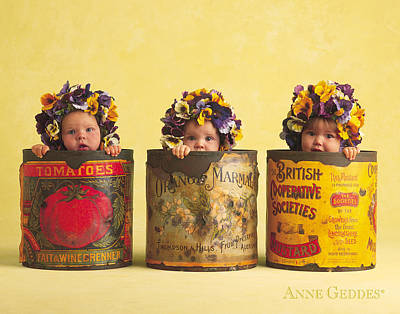 Fine Art Flower Photograph - Pansies by Anne Geddes